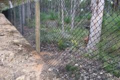 kangaroo / vermin fence