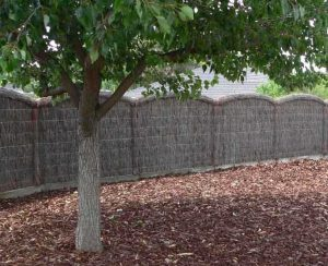 brushwood fence and tree
